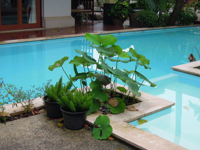 Plants by swimming pool against trees