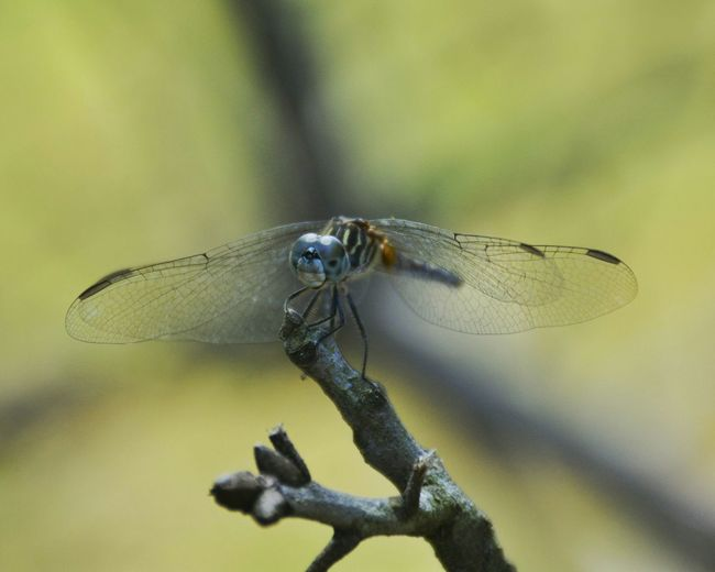 Dragonfly In My