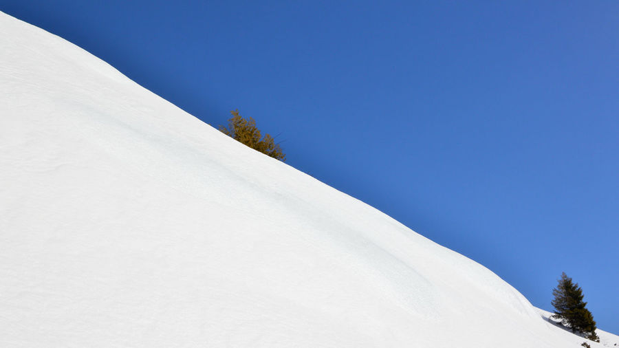 Trees on snow covered mountain