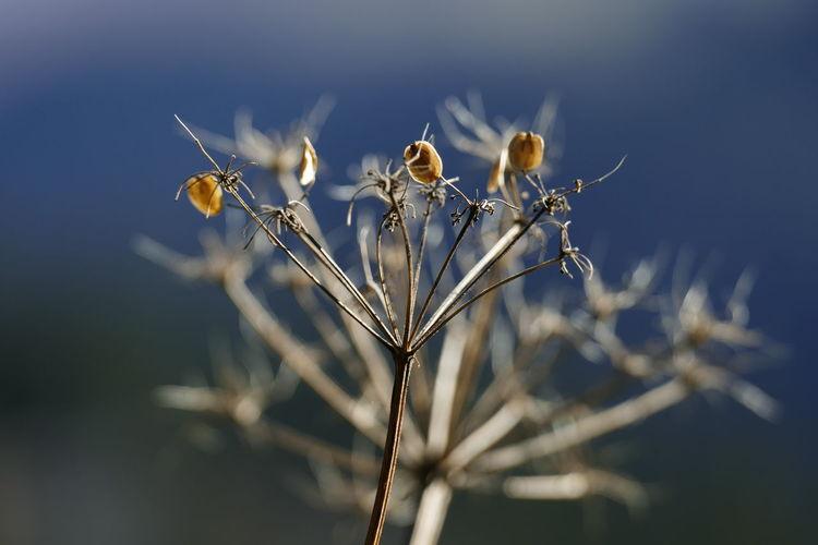 Plant Focus On