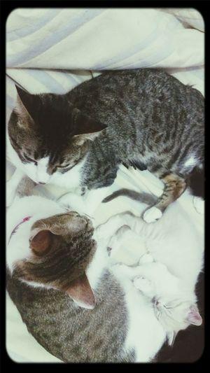 Heitor aproveitando os últimos dias com a mamãe e o papai! Cats Laura Yuya Heitor