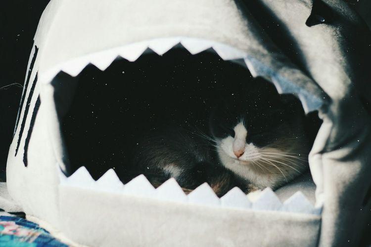 Cat relaxing in pet bed