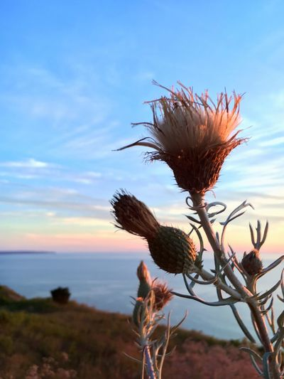 Nature Growth Plant Sky Beauty In Nature Tranquility No People Outdoors Scenics Sunset Day Close-up Sleeping Bear Dunes Lake Michigan Peaceful Thistle Flower Happiness SUMMER BREAK