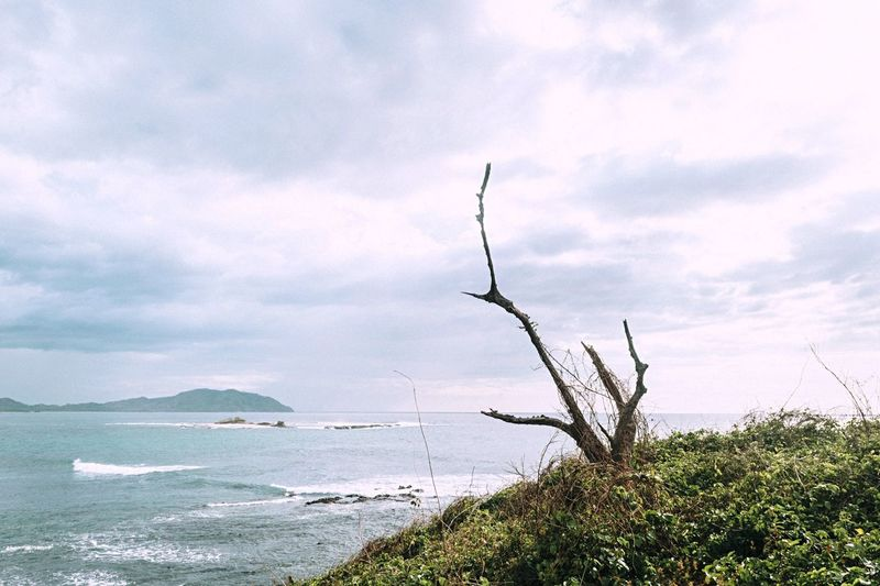 Beach Nature EyeEm Nature Lover Trees Tree Sky Clouds Landscape Landscape_Collection Nature_collection