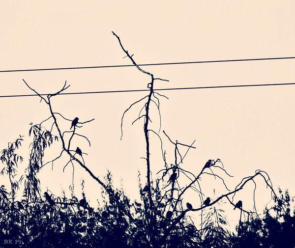Eyeem Hungary Fujifilm Fujifilm Finepix S4800 Birds Tree Sepia Enjoying Life