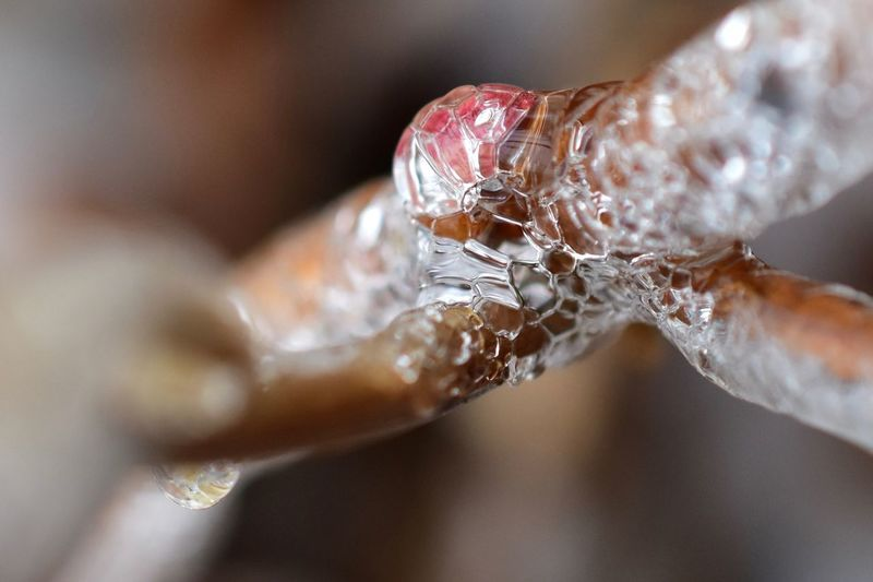 Close-up of insect frozen on branch