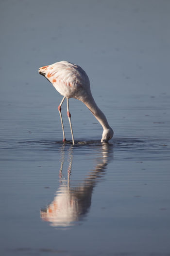 Side view of a bird in water