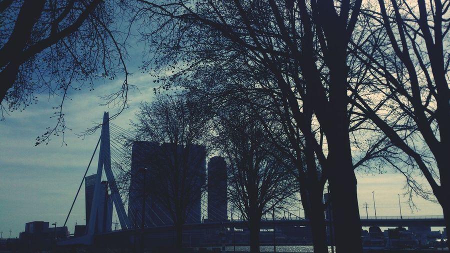 Rotterdam Derotterdam Erasmusbrug Urban Nature