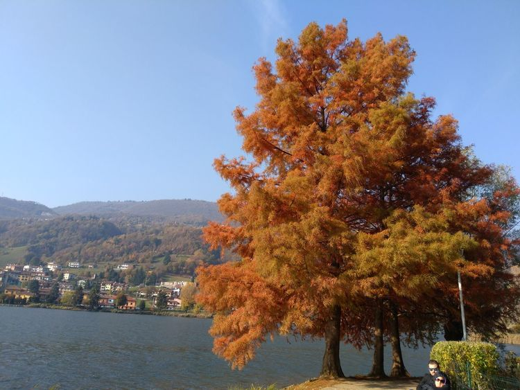 Tree Mountain Autumn Pinaceae Sky Landscape