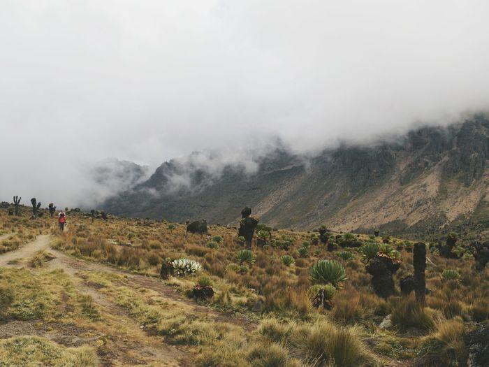 Scenic view of field against sky, mount kenya national park, kenya