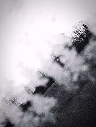 B&w Street Photography Winter Hibernation Barren Trees IPhoneography Frosted Windows Passenger Side View