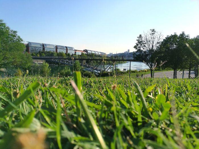 Water Clear Sky Sky Grass Blooming Goal Post Blade Of Grass Irrigation Equipment Tennis Soccer Goal