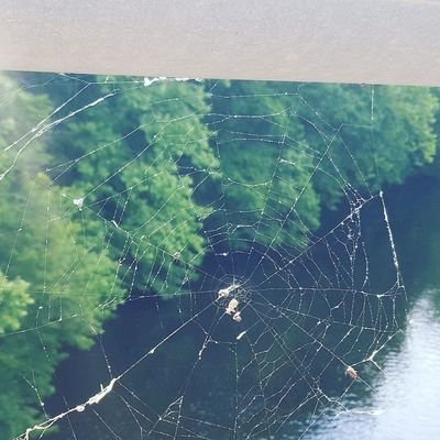 Mr Spider has prime waterfront property Spider Web Close-up Backgrounds Water No People Nature Day Outdoors Fragility Prime Property Explore Love My Life  Love Where You Live Power In Nature Beauty In Nature Spider