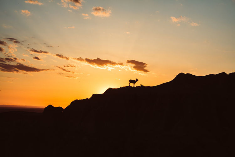A goat at sunset in the Badlands National Park Badlands Badlands National Park, South Dakota Goat Adventure Beauty In Nature Landscape Leisure Activity Mammal Mountain Nature Orange Color Outdoors Scenics Silhouette Sky Sunset Tranquil Scene Tranquility