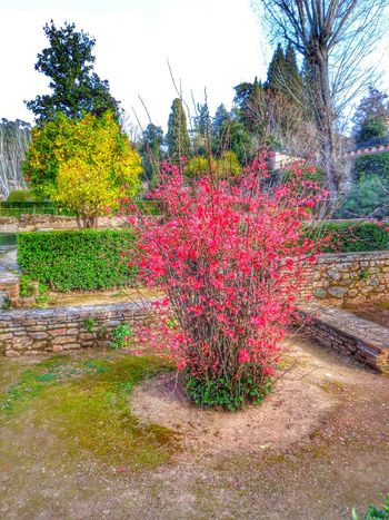 Mobilephotography Mobilephoto Streetphotography Alhambra Granada History Mobileart SPAIN Colors Flower Flowers,Plants & Garden Flower Photography Andalucía España🇪🇸
