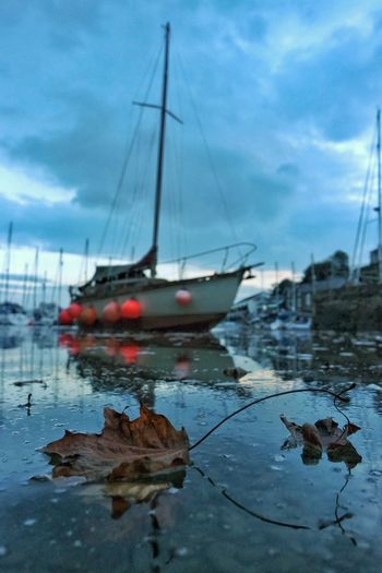 Leaf Autumn Harbour Water Nautical Vessel Reflection Sky Cloud Sea Waterfront Tranquility Nature Focus On Foreground Tranquil Scene Cloud - Sky No People Porthmadog Sailboat Mast