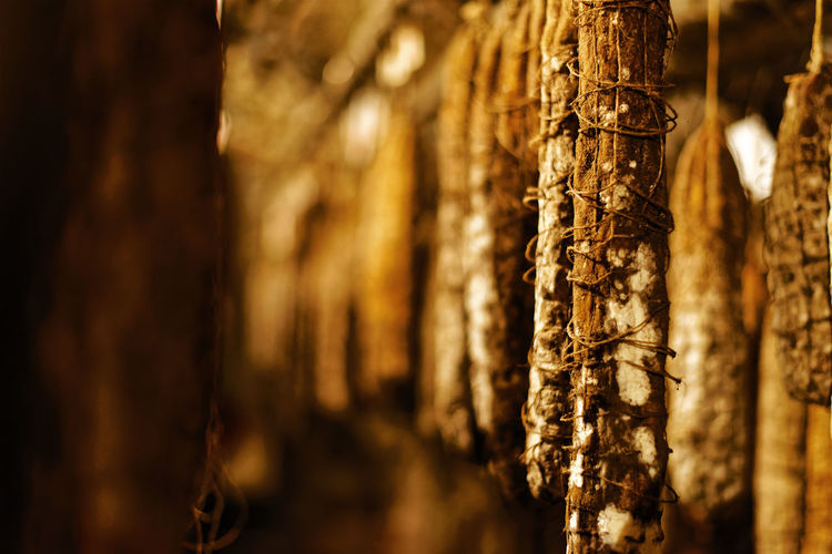 Close-up of tree trunk against building