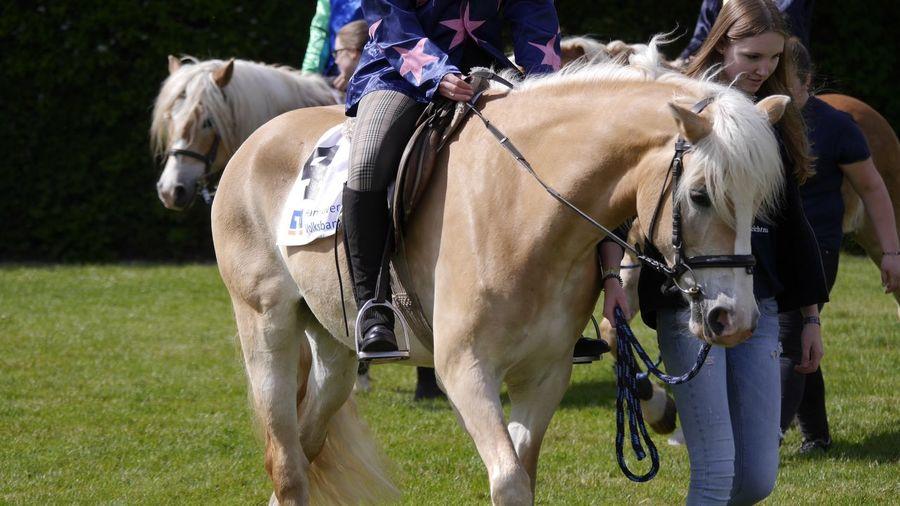 Horse Riding Haflinger Hannover Pferderennbahn Auf Der Bult EyeEm Best Shots Horse