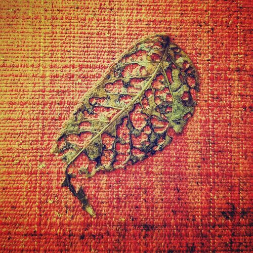 Ink Fingerprint Indoors  Outdoors Decay Leaf StillLifePhotography No People Full Frame Close-up Red Microbiology Green Flatlay Mother Nature CIRCLE Of LIFE Death Nature Death In Nature Death & Decay dea
