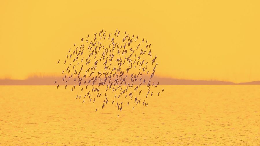 Flock of birds in the sea at sunset