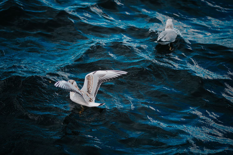 High angle view of seagull flying in sea