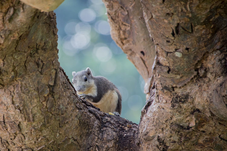 Animal Themes Animal Wildlife Animals In The Wild Beauty In Nature Close-up Day Focus On Foreground Mammal Nature No People One Animal Outdoors Rodent Squirrel Tree Tree Trunk