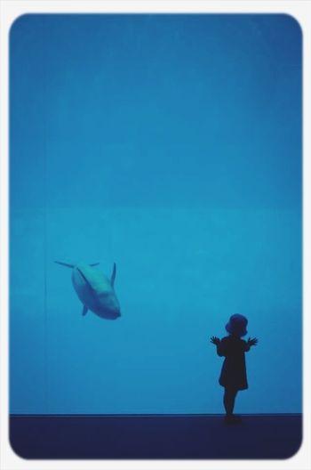 Silhouette of fish swimming in sea