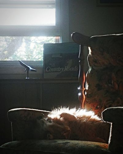 View of cat resting on window at home