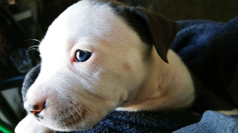 Close-Up Of Puppy At Home