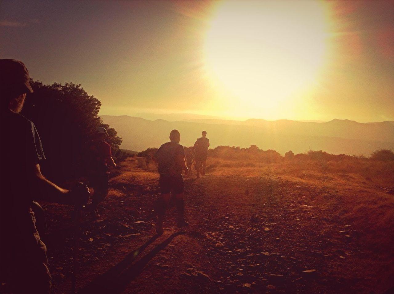 SUN SHINING THROUGH LANDSCAPE