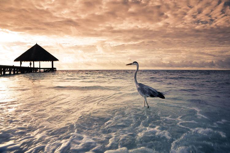 Bird on beach against sky during sunset