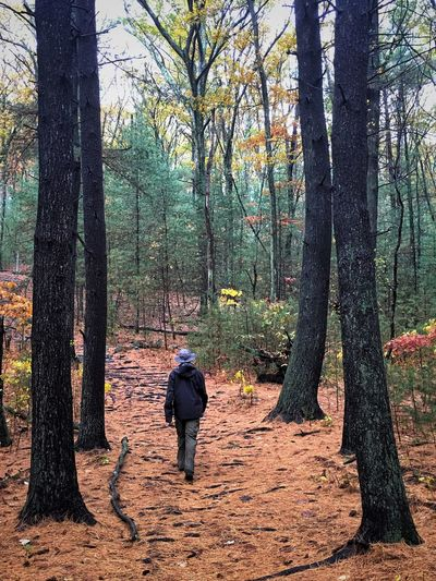 IPS2015Fall IPhoneography IPS2016Nature Woods Walking Autumn Autumn Colors Man Man With Hat IPS2016People