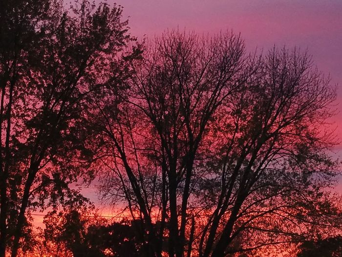 Outdoors Scenics EyeEm Nature Lover Beauty In Nature Sky Tranquility Cloud - Sky Popular Photo Popular Photos Skyporn Pink Sky Sunset Sunset_collection EyeEm Best Shots Landscape Photooftheday Tree Massachusetts Massachussets