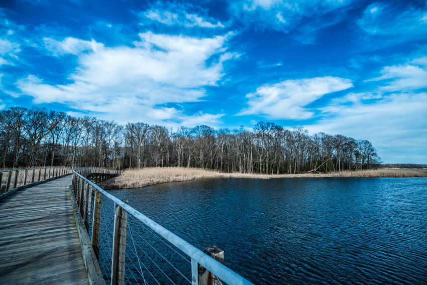 Baltimore Bare Tree Beauty In Nature Blue Cloud - Sky Cufotos Day Irix 15mm Lake Maryland Nature Nikon Nikonphotography No People Outdoors Railing Scenics Sky Tranquil Scene Tranquility Tree Water