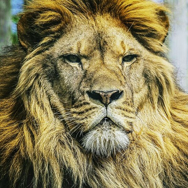 UltrAslan GALATASARAY ☝☝ Sampiyon GALATASARAY Lion Eyemturkey Eyembestpics