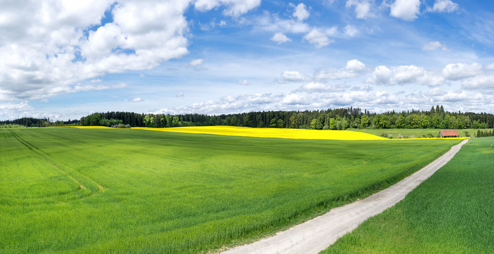View over a large, young cereal field with a path and a blooming rapeseed field behind it in front of a forest Agriculture BIG Cereal Field Footpath From Above  Green Growth Nature Path Young Cereal Field Cornfield Countryside Cultivated Farming Grain Field Landscape Large Rural Scene Scenery Sky Spring Springtime Way
