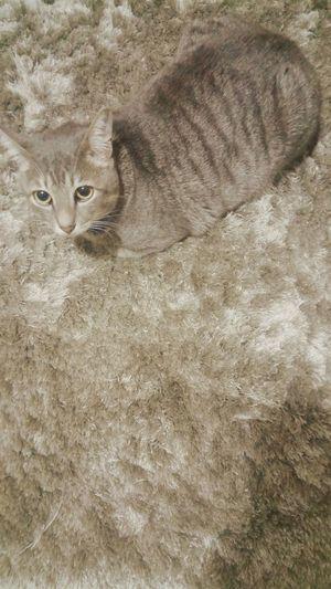 Grey world Cat Pets Blackandwhite Grey Shades Of Grey
