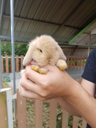 Rabbit Holland