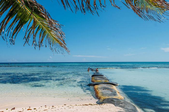 Beach Life Mexico Palm Tree Tropical Paradise Beach Beach Day Beauty In Nature Blue Blue Sky Day Land Nature Ocean Outdoors Palm Leaf Palm Tree Sky Summer Tranquil Scene Tranquility Tree Tropical Tropical Climate Vacation Water