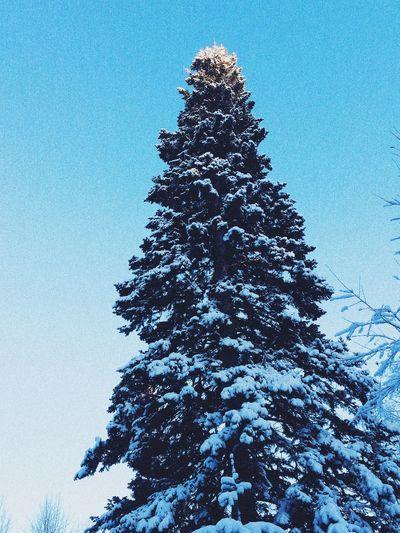 La bella-invierno ya está muy cerca! ❄️❄️❄️ Enjoying The View Russia Snow Vscocam
