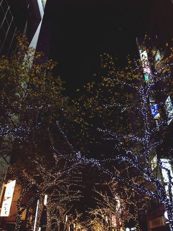 Night Illuminated Low Angle View Celebration Arts Culture And Entertainment Architecture Tree Built Structure Christmas Lights Outdoors No People Sky 12/1, 2016🌦 雨から始まった師走☔️ 紅葉とイルミネーションなんて贅沢な街中💫