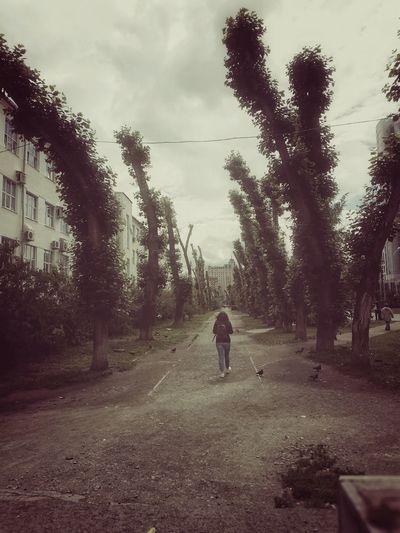 Alley The Street Photographer - 2019 EyeEm Awards Tree Full Length Child Forest Fog Road Walking Sky
