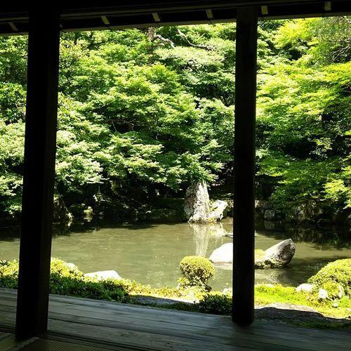 6/6 蓮華寺 日射しが強くなってきた。今日は人が多い。 月一蓮華寺 蓮華寺 京都 Kyoto 寺 Temple Team_jp_ Japan Instagood 景色 Scenery 自然 Nature Icu_japan Ig_japan Ig_nihon Jp_gallery Japan_focus