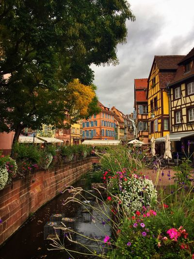 Colmar Colmar, Alsace, France Elsass Frankreich 🇫🇷 Cityscape Cityview River Riverside Flowers Houses Beauty In Nature Cloudy Sky France Colorful