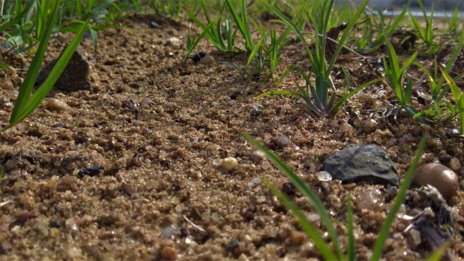 Land Agriculture Day Dirt Field Food Green Color Ground Growth Land Leaf Mud Nature No People Plant Plant Part Selective Focus