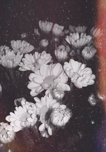 Flowers Flowerporn Flower Photography Liasaarfe Amateurphotographer  EyeEm Nature Lover