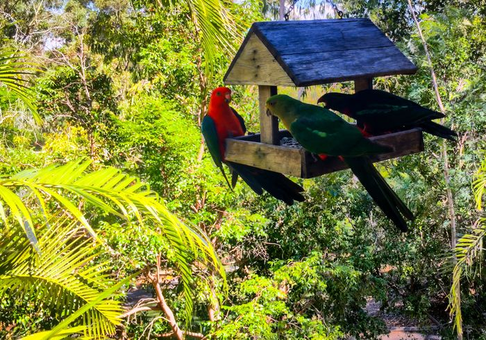 IPhone IPhoneography EyeEm Birds King Parrot IPS2016Composition Iphonephotography