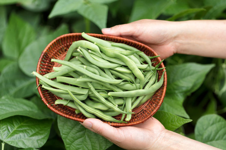 Close-Up Of Hand Holding Basket With Green Beans