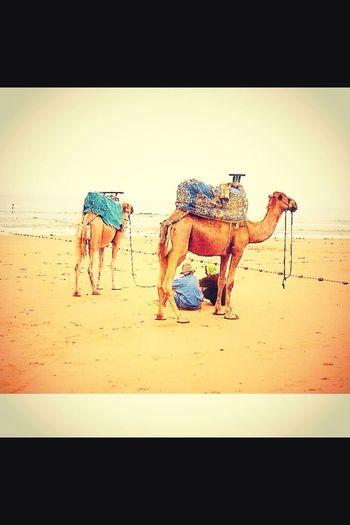Follow my instagram: Alaeddine Farahi Beach Life View Sea Sand Sun First Eyeem Photo Animals Follow #f4f #followme #TagsForLikes #TFLers #followforfollow #follow4follow #teamfollowback #followher #followbackteam #followh
