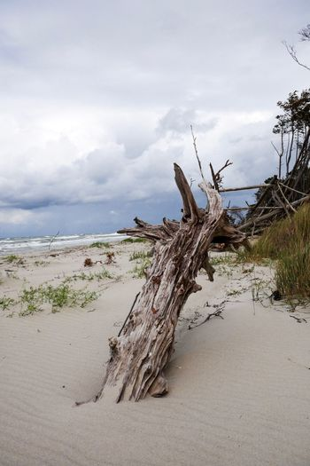Cloud - Sky Sky Land Beach Nature Tree Tranquility Sand Water Plant Day Beauty In Nature Sea Tranquil Scene No People Scenics - Nature Wood Driftwood Non-urban Scene Dead Plant